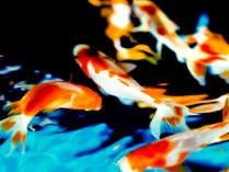 幻想的な金魚のアクアリウム