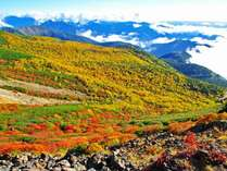 乗鞍エコーラインの紅葉風景/ ※例年9月中旬から10月中旬までが紅葉の見頃です。