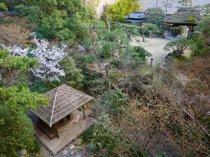 ふなや庭園に咲き始めた桜。【3月下旬頃】