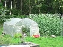 自然回帰線の小さな菜園です。ビニールハウスで出来る水ナスは最高。自家製味噌をつけて生で食べます。