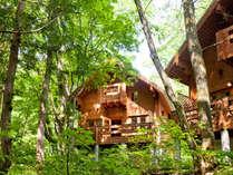 美しい木立に囲まれた静かな立地