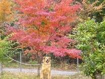 和歌山の紅葉シーズンは ゆっくりと訪れます
