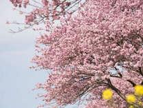 【金目鯛のしゃぶしゃぶ】桜香る金目鯛のしゃぶしゃぶディナー★2食付き