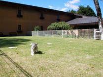 200平米の天然芝のドッグラン 暖かい季節には水遊びプールも設置