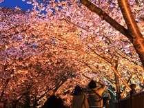 河津夜桜さんぽ♪SAZANA・湯苑が送迎します(無料)