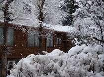 (冬)静かな早朝!中庭の樹木に降り積もる新雪が美しい(12月下旬頃~)