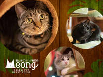 猫と過ごすバリ風民宿MEONG