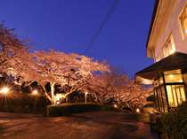 桜の開花時期はライトアップで幻想的に
