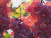 *ここは山梨甲州市!周辺には果物狩りできる施設がたくさん♪季節の果物狩りを楽しめますよ