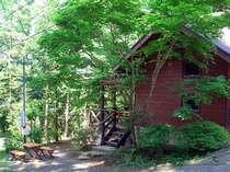 森に囲まれた翠緑の家 目の前の庭ではバーベキューが楽しめます