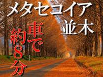 吉平なら!メタセコイア並木まで車で約8分!好立地です♪秋の紅葉を見るなら吉平へGO~(^^)/
