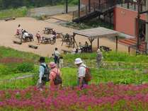 山頂レストラン「あるぷす360」と高山植物(五竜高山植物園)