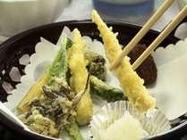 雪国を代表する、初夏にしか採れない山菜、根曲がり竹