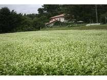 綺麗な蕎麦畑を前景にした洋風民宿風の外観が好評です。