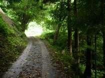 マイナスイオンの緑のトンネル