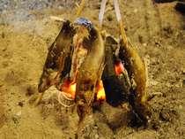 囲炉裏で焼くイワナの塩焼き