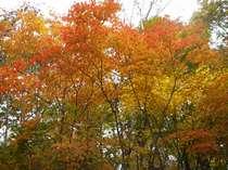 紅葉はじまる信濃路