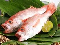 幻の高級魚「のどぐろ」で秋の日本海を満喫[秋一例]