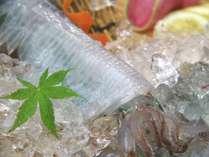 6月~7月上旬新鮮な活イカをさばいてすぐに、テーブルへ…お食事処だから叶う、贅沢な時間。