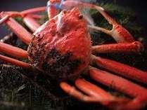 カニ本来の美味しさが楽しめるボイルは、高価な地ガニを使用(おひとり様半身)