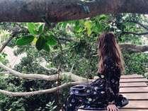ゲストハウスのガジュマルの木のテラス。インスタにオススメ。