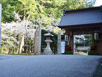 山門とソメイヨシノ【当院駐車場は山門脇にございます。】