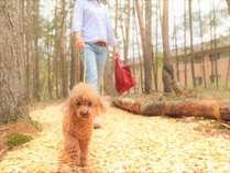 【散歩道】敷地内の散歩道。秋は涼しい風と自然の落ち葉のじゅうたんが心地よく、わんちゃんも大喜び!