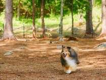 【ワイルドドッグラン(約750平米)】木漏れ日の中、柔らかな土を駆け抜ける愛犬を眺めて。