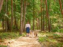 【散歩道】敷地内に作られた散歩道は、木漏れ日が美しく、夏でも涼しい癒しの空間。