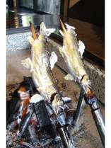 囲炉裏で焼く鮎の塩焼