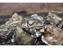 シーズン到来!江田島産のプリップリの牡蠣を思う存分お楽しみください。