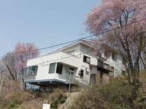 春、山桜に囲まれたTANPOPO-INN。
