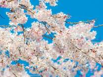 【4月のタイムセール】桜咲き誇る伊香保でお花見&まったり温泉プラン★夕食時に桜色のロゼワイン1杯付