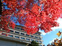 お部屋から高い空と真っ赤な紅葉。oо○