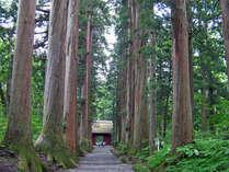 *戸隠神社の杉の参道。鋭気を養うにはオススメです。