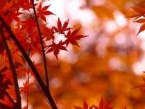 紅葉シーズン到来!戸隠の紅葉を満喫する