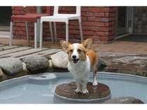 中庭にあるドッグスパ  ここも温泉だよぉ