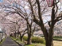 山陰の冬も終わり、間もなく桜の季節がやってきます。心躍る季節の到来です。