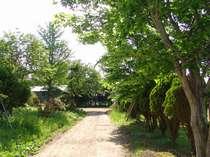 *自然豊かなお庭を散策♪気分も晴れやかに!