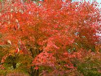 *秋には色とりどりの美しい紅葉がご覧いただけます…