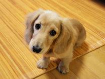 *大好きな愛犬と一緒にお泊りできるお部屋もございます!