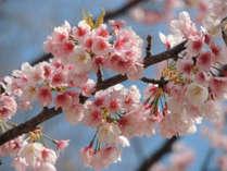 会津は桜の名所がいっぱいございます。ホテル敷地内にも桜がとても綺麗