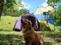 テントを張って本格アウトドアを楽しもう★ユネスコエコパークの大自然とともに楽しむテント泊!素泊まり