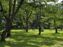【庭園・夏】