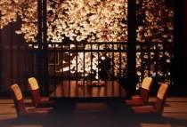 当館のお部屋より眺められる桜です。