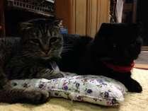 猫若旦那のとらとくろ。お客様大好き甘えん坊のくろとやんちゃ坊主のとらです。