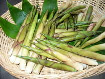 立山で採取したすす竹の子・皮付きで焼くととても美味しいです。