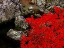 【5大特典付】秋のみたらい渓谷へ!竹の皮に包まれたおにぎりを持って出かけませんか?紅葉満喫プラン♪