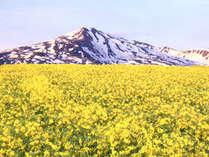 【絶景満喫】☆菜の花に浮かぶ鳥海山を見に行こう!☆