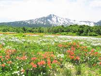*【桑の木台湿原】春を迎え様々な草花が楽しめます。